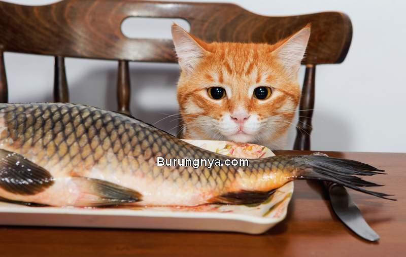 Kucing Tidak Boleh Makan Ikan Mentah (texarkanagazette.com)
