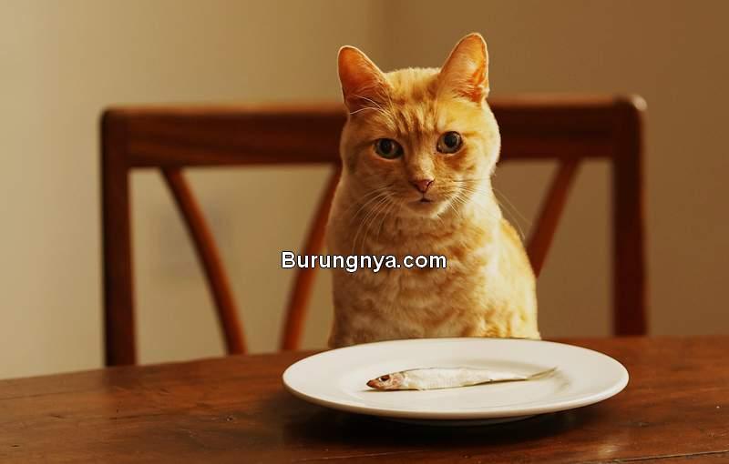 Kucing Tidak Mau Makan Ikan (webmd.com)