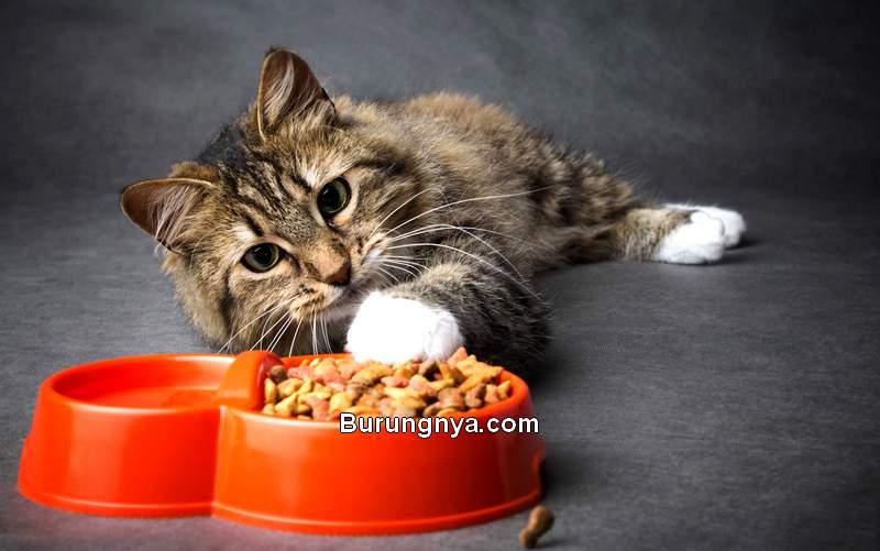Kucing Tidak Mau Makan (hillcrestanimals.com)