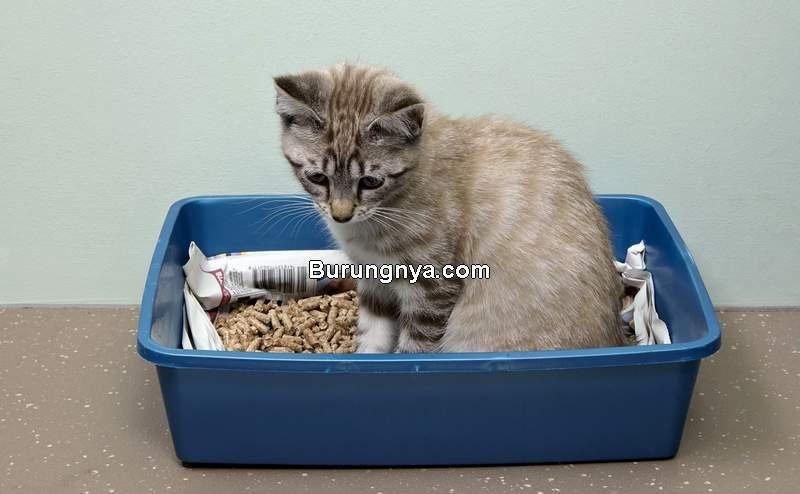 Latihan Kucing Agar Tidak Buang Air Sembarangan (thesprucepets.com)
