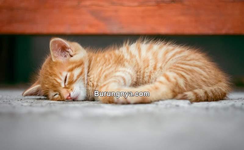 Makanan Untuk Kucing Sakit (thecatfoods.com)