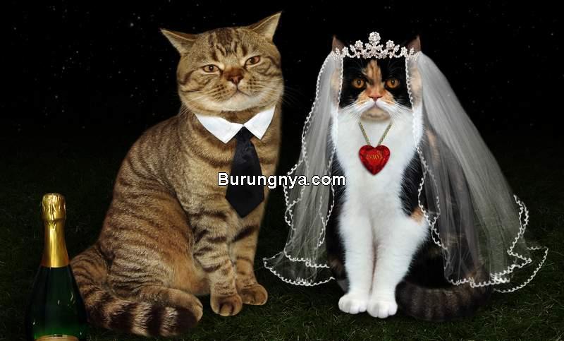 Perkawinan Kucing (timesofisrael.com)