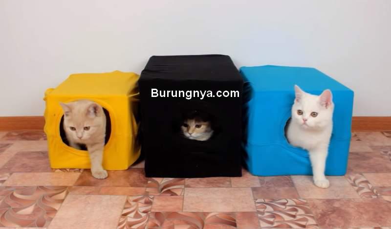 Rumah Kucing Simpel dari Kardus (youtube.com)
