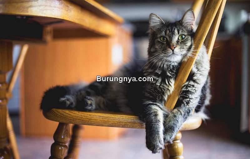Cara Mengetahui Usia Kucing (recoverywarriors.com)