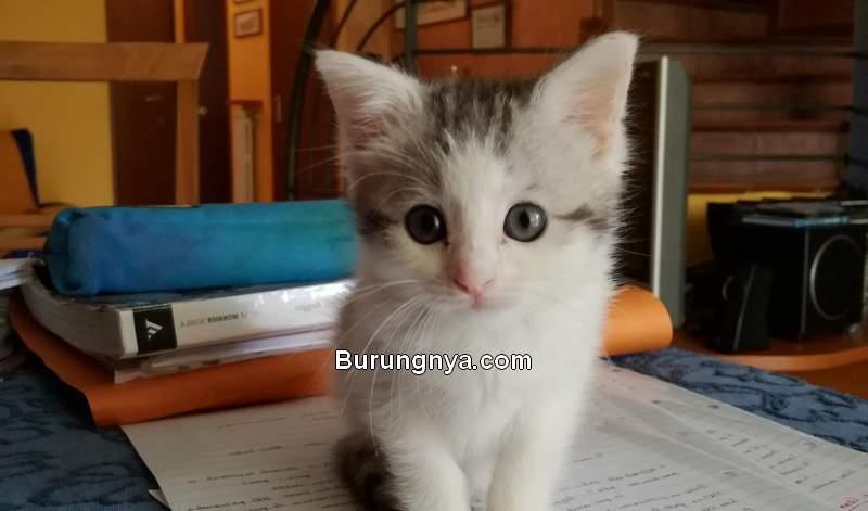 Cara Merawat Kucing 1 Bulan (reddit.com)