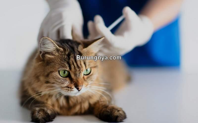 Jenis Vaksin untuk Kucing (dailypaws.com)