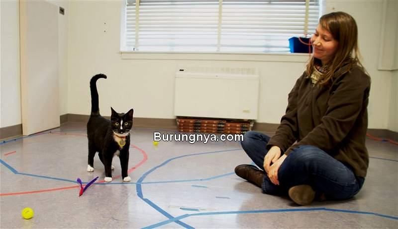 Kucing Datang Saat Dipanggil Namanya (nbcnews.com)