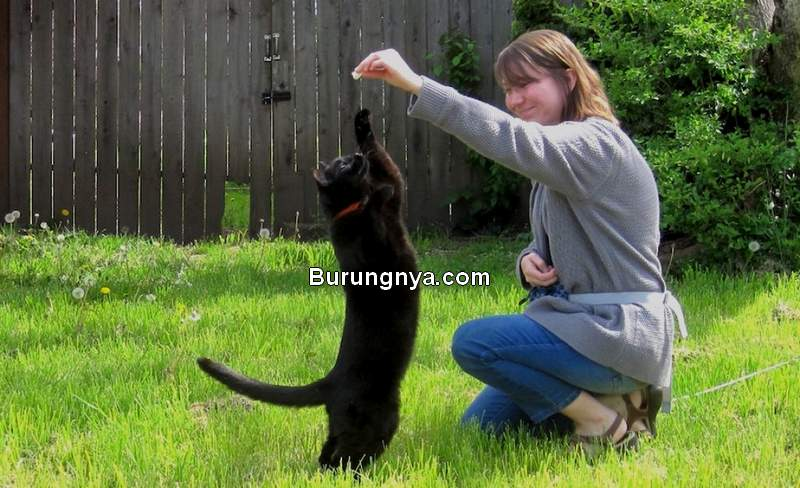 Latihan Kucing Agar Datang Saat Dipanggil Namanya (oregonbusiness.com)