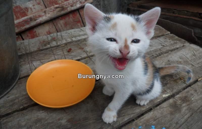 Makanan Kucing 1 Bulan (reddit.com)