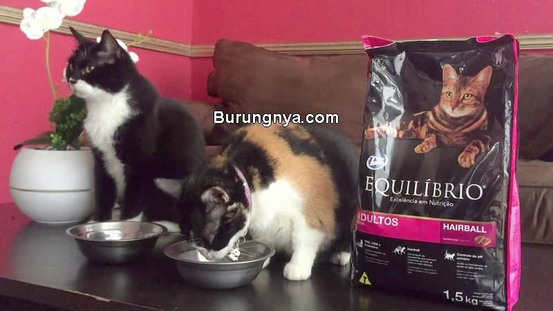 Makanan Kucing Equilibrio (youtube.com)