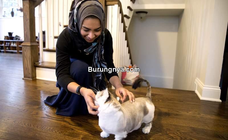 Makanan Kucing Halal Merek dan Harga (squarespace.com)