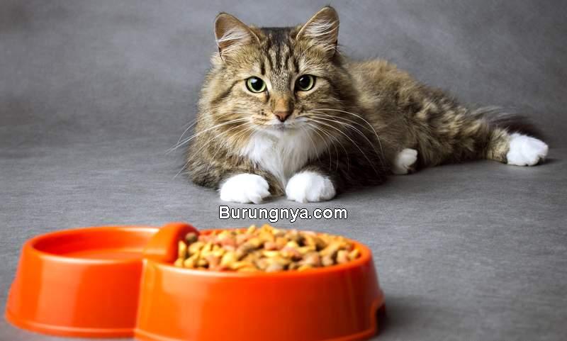 Makanan Kucing Terbaik (tufscatnip.com)