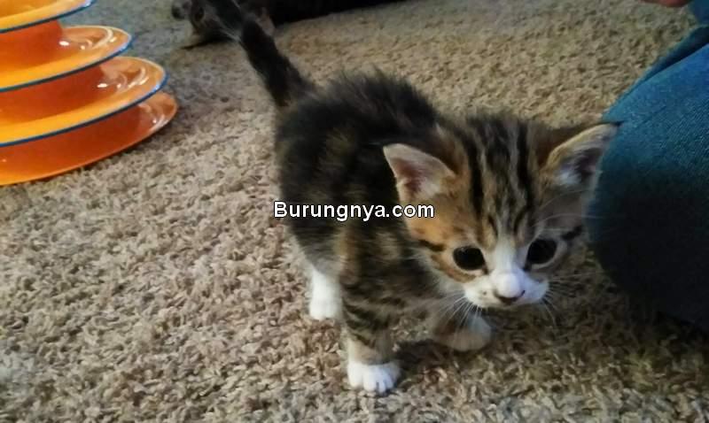 Makanan Kucing Umur 1 Bulan (imgur.com)