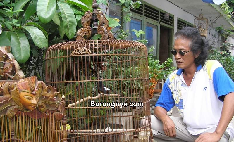 Tipe Kicau Mania di Indonesia (bird-news.blogspot.com)