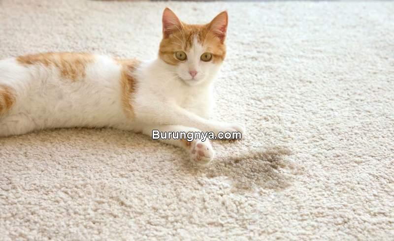 Cara Membersihkan Bekas Noda Pipis Kucing (unionlakepetservices.com)