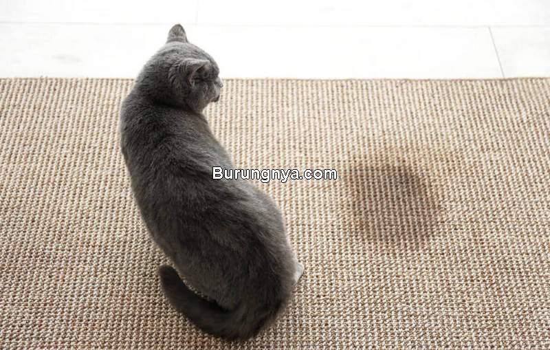 Cara Menghilangkan Bau Kencing Kucing (feliway.com)