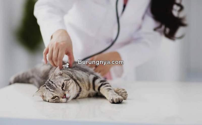 Cara Mengobati Kucing Muntah (petfoodindustry.com)