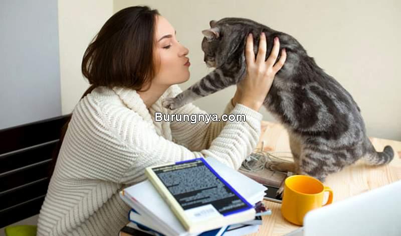 Ciri Kucing Birahi (catster.com)