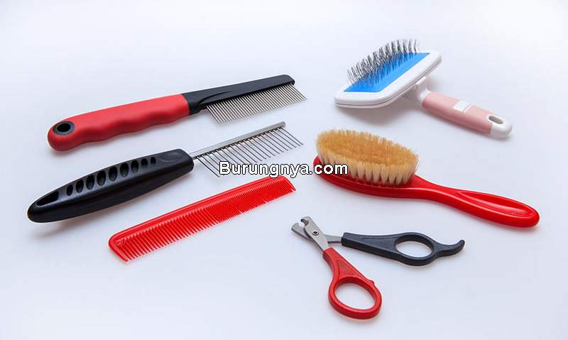 Grooming Kit Kucing (omlet.co.uk)