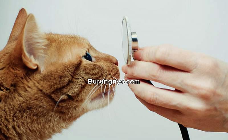 Kucing Muntah Kuning dan Mencret (justcatsvet.com)
