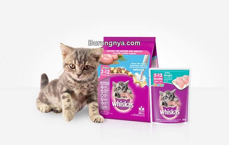 Makanan Kucing Whiskas Kelebihan dan Kekurangan (whiskasindonesia.com)