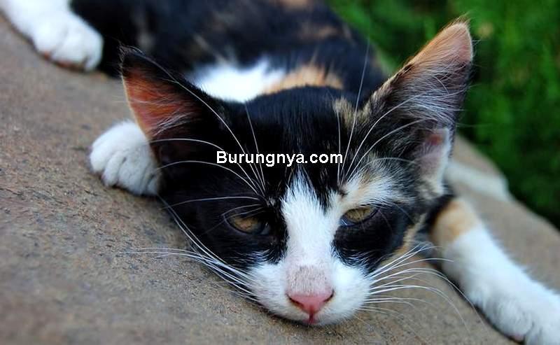 Makanan dan Minuman Kucing Berbahaya (animalwised.com)