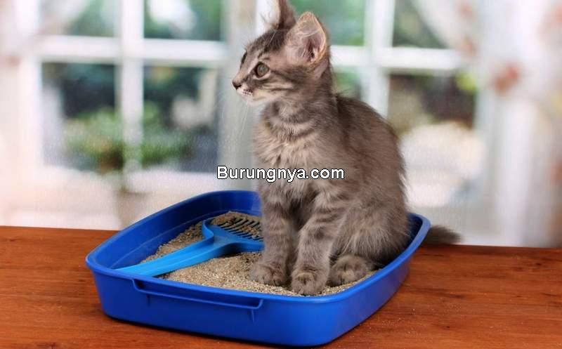 Perlengkapan dan Peralatan untuk Merawat Kucing (vetcarepethospital.ca)