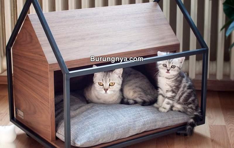 Rumah Kucing (pinterest.com)