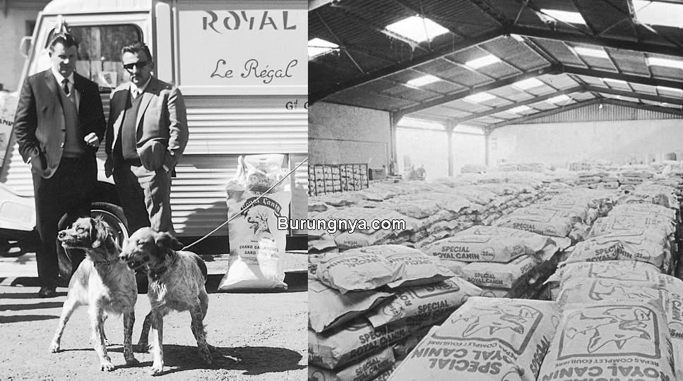 Sejarah Makanan Kucing Royal Canin (royalcanin.com)