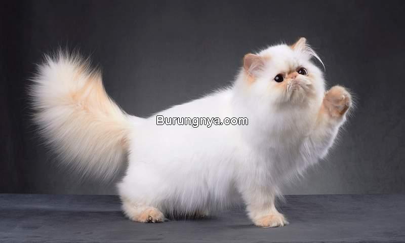 Vitamin Bulu Kucing Terbaik (lovetoknow.com)