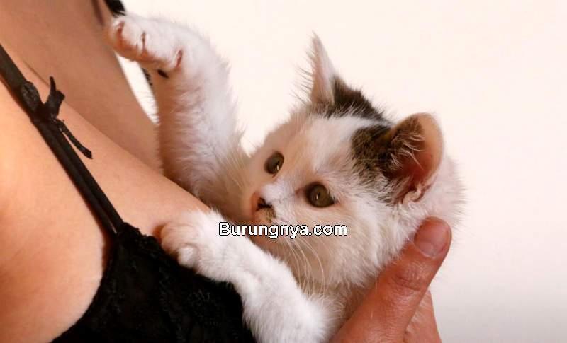 Cara Mengatasi Birahi Kucing Tanpa Kawin (newshub.co.nz)