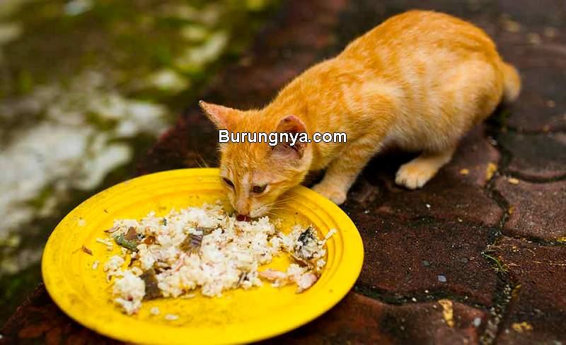 Apakah Kucing Boleh Makan Nasi (thehappycatsite.com)