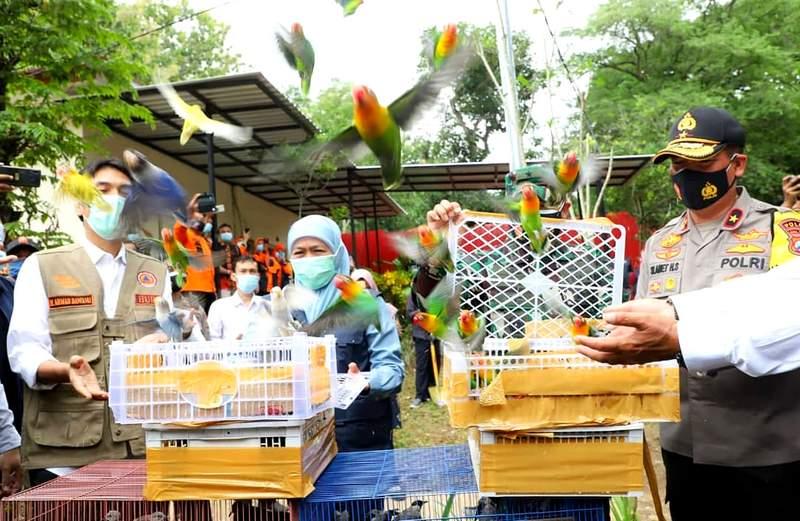 Gubernur Khofifah Melepas Burung Lovebird Liar (facebook.com)
