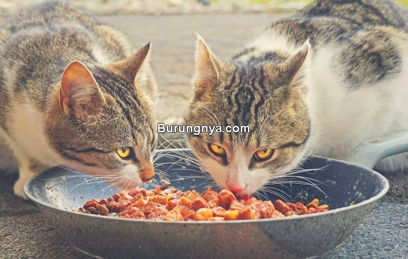 Harga Makanan Kucing Murah Meriah dan Mereknya (catlycat.com)