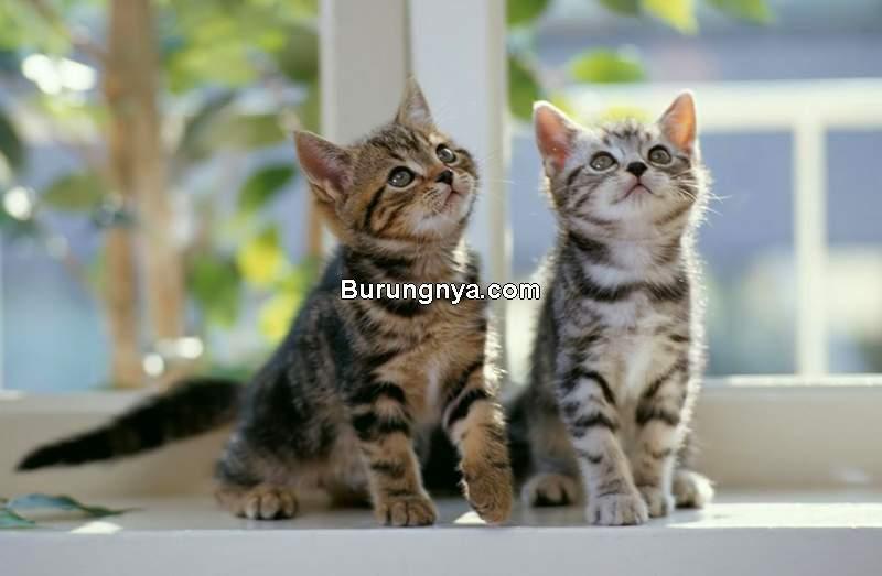 Kelamin Anak Kucing Jantan atau Betina (apurrfectcat.wordpress.com)