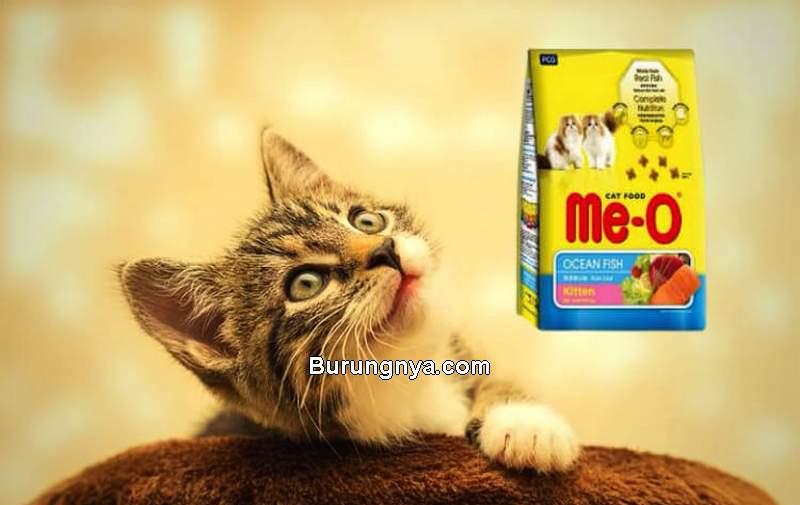 Makanan Kucing 2 Bulan (burungnya.com)