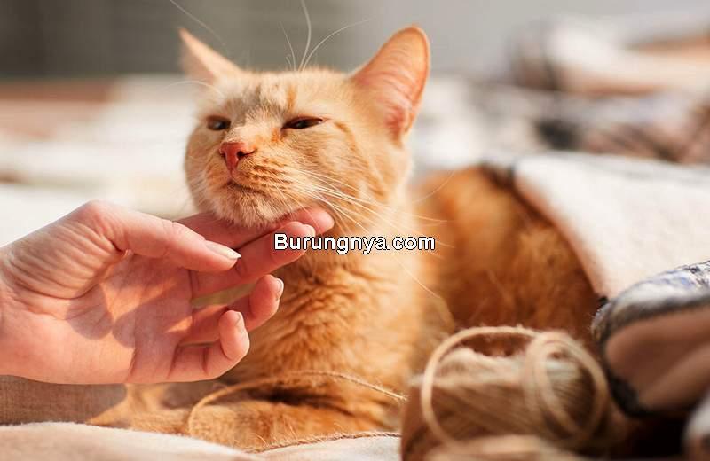 Makanan Kucing Bulu Rontok (mypetandi.com)