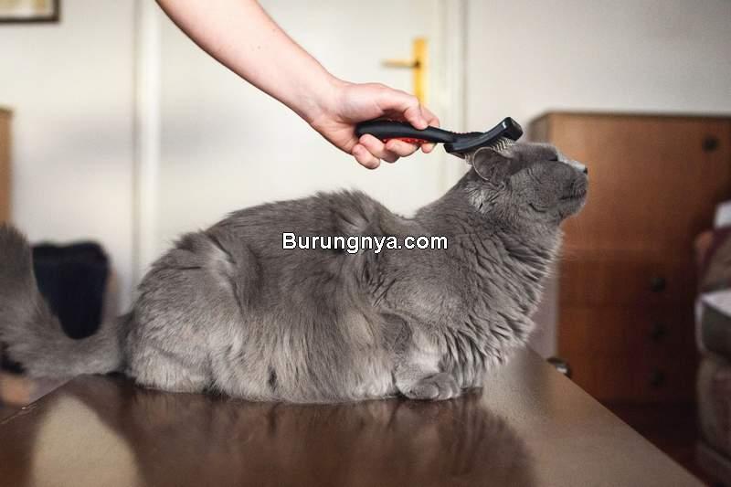 Makanan Kucing untuk Mengatasi Bulu Rontok (thesprucepets.com)