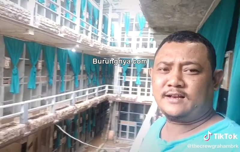 Ternak Burung Murai Batu Medan Viral di TikTok (tiktok.com)