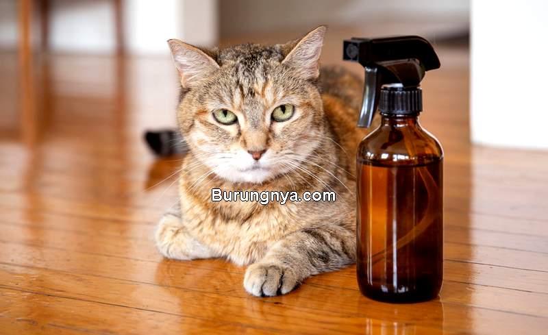 Cara Membasmi Kutu Kucing dengan Bahan Sederhana di Rumah (thespruce.com)