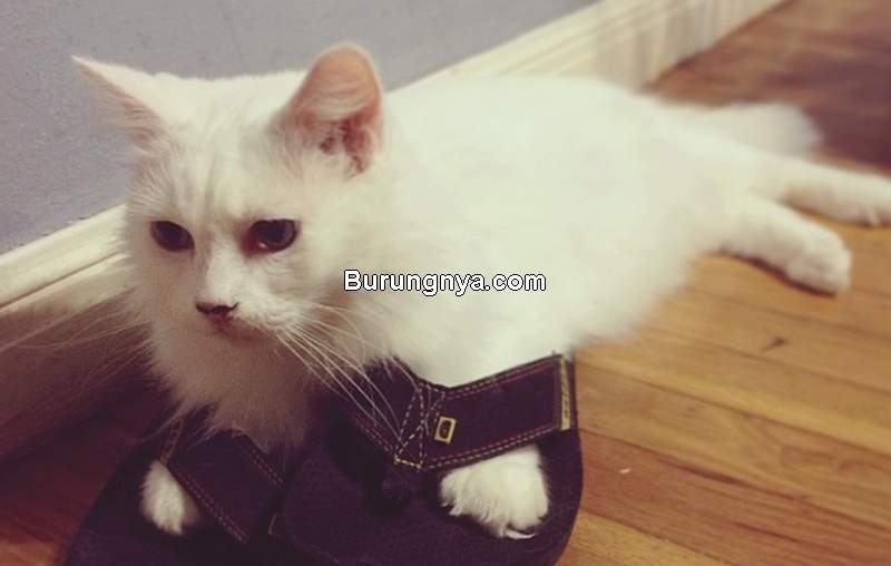 Cara Menenangkan Kucing Birahi Tanpa Kebiri (flickr.com)