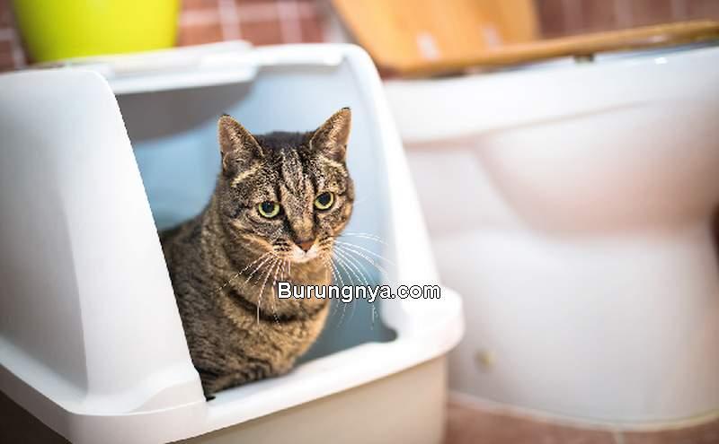 Cara Mengatasi Kucing Mencret atau Diare (catster.com)
