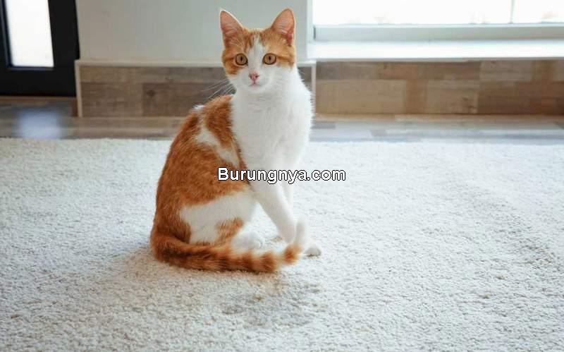 Cara Menghilangkan Bau Pipis Kucing (homeopet.com)