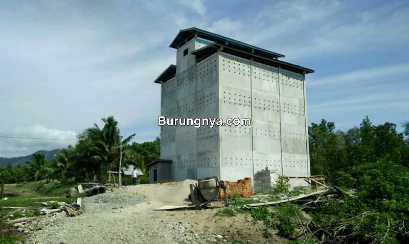 Desain Rumah yang Paling Disukai Burung Walet (radarnusantara.com)