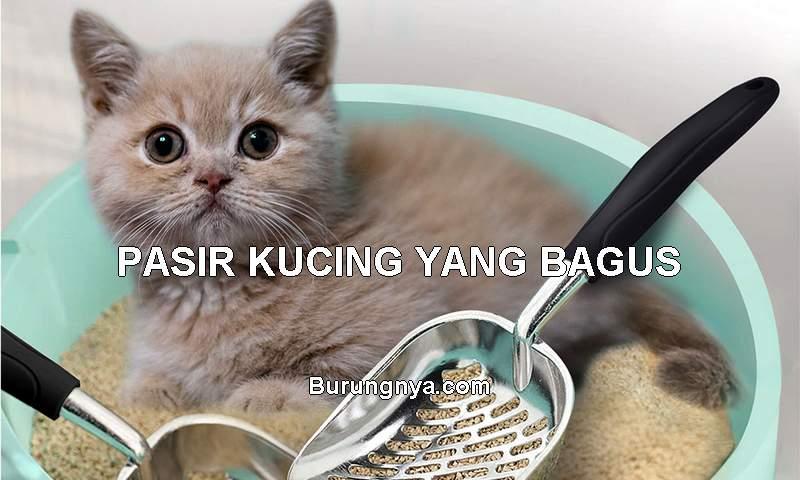 Jenis Pasir Kucing yang Bagus (cicig.co)