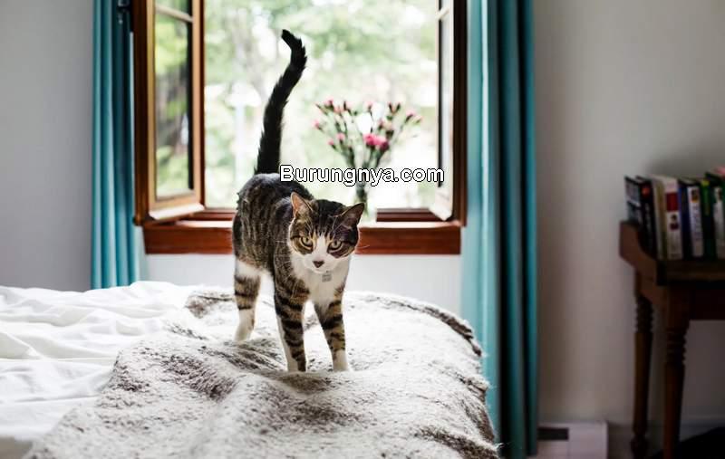 Kucing Dipelihara di Dalam Rumah (marthastewart.com)