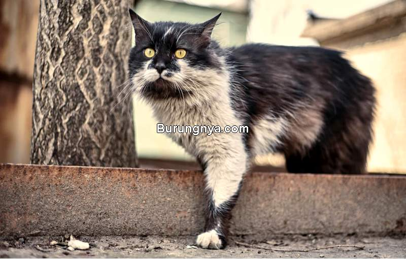 Kucing Dipelihara di Luar Rumah (allaboutcats.com)