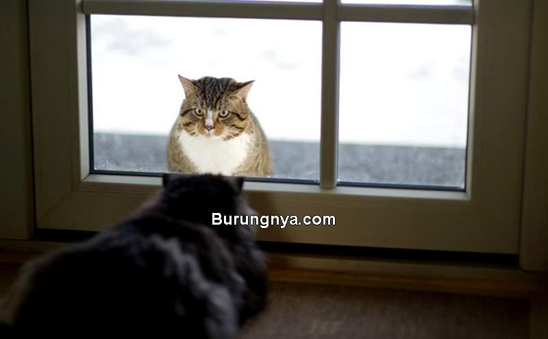Kucing Lebih Bagus Dipelihara Dalam atau Luar Rumah (catster.com)
