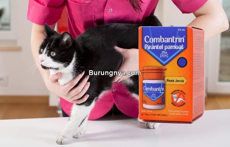 Obat Combantrin Anak untuk Kucing Cacingan (halodoc.com)