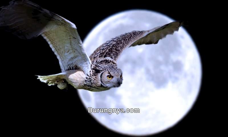 Alasan Burung Hantu Dipanggil Burung Hantu (wallpaperaccess.com)
